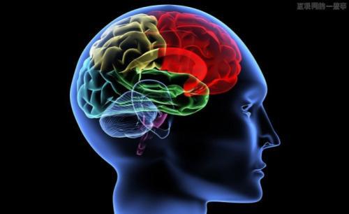 """迄今最详细人脑图像 """"出炉"""""""